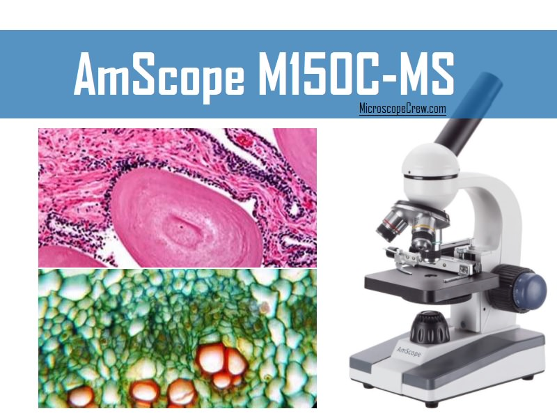 AmScope M150C-MS Compound Monocular Microscope review